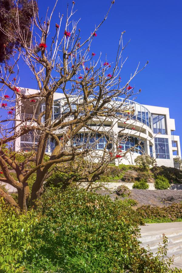 La Jolla, Califórnia, EUA - 4 de abril de 2017: Terreno da Universidade da California San Diego Flor despida da árvore coral na p foto de stock royalty free