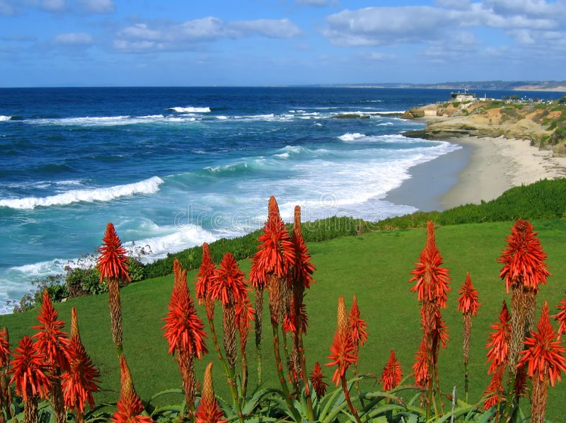 La Jolla coast, California, with red succulents stock photo