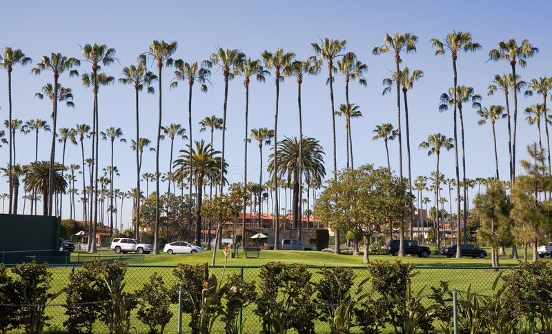 la jolla palmowi wysokie drzewa zdjęcia royalty free