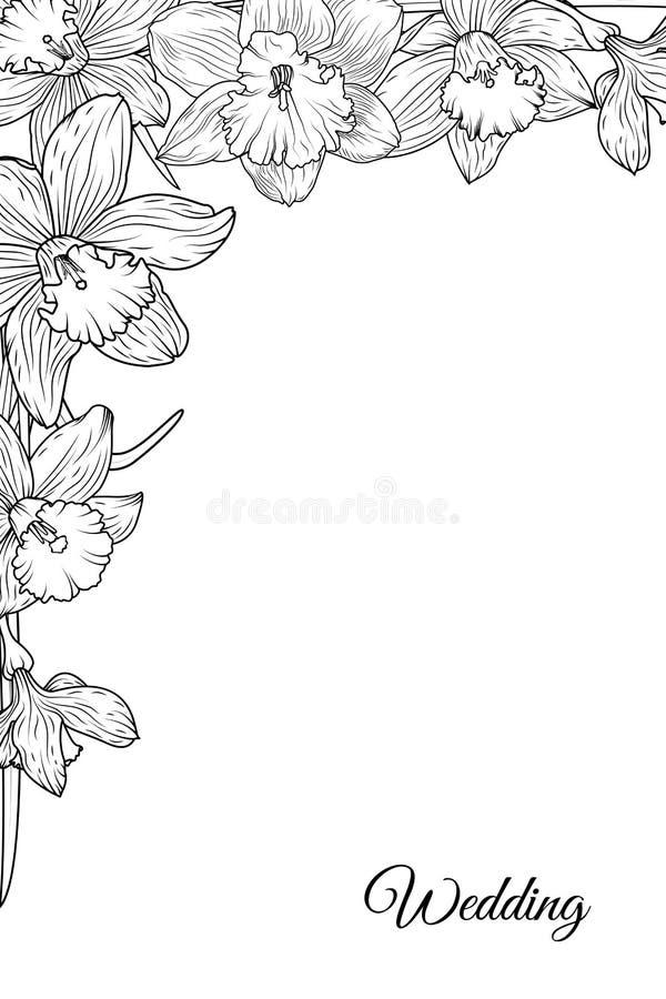 La jonquille de narcisse fleurit le calibre faisant le coin de cadre illustration stock