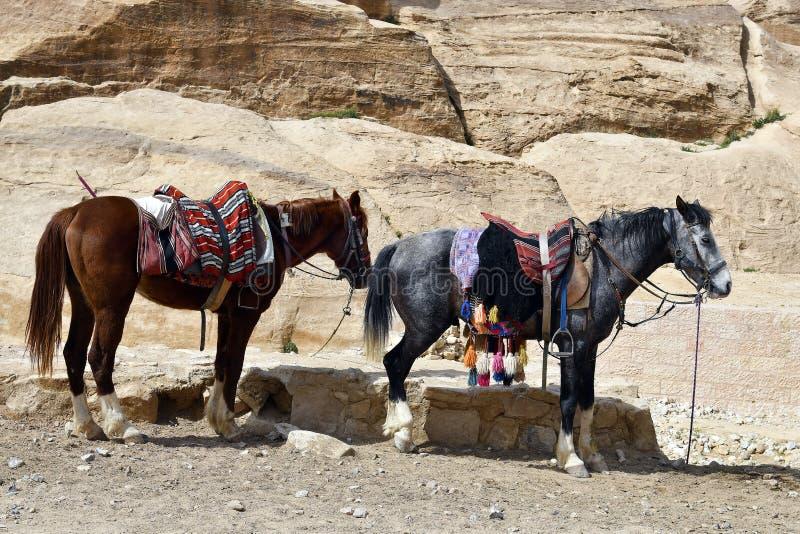 La Jordanie, Moyen-Orient, chevaux photo libre de droits