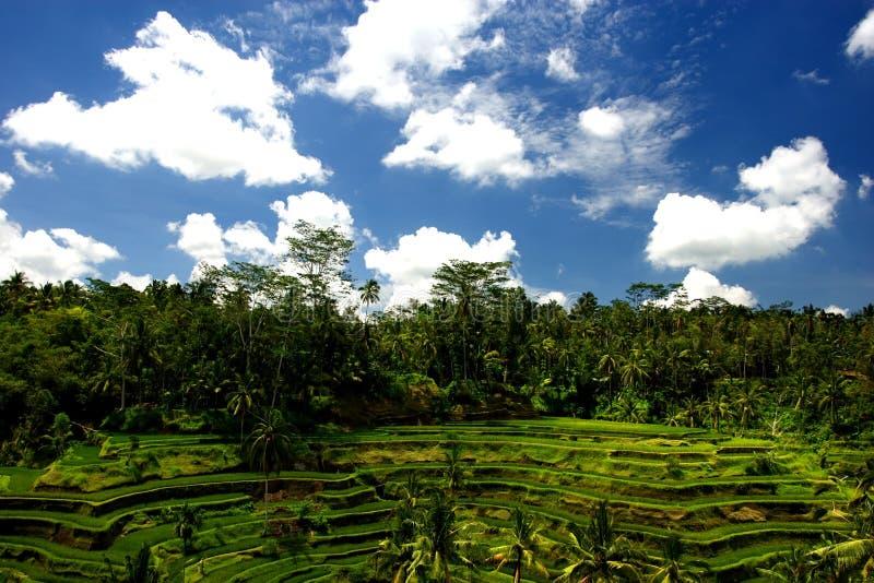 La jungle de Bali images libres de droits