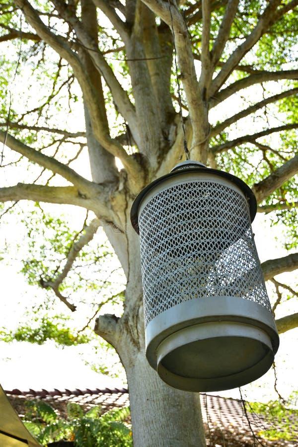 La lámpara colgante con el fondo del árbol de la oficina imagenes de archivo