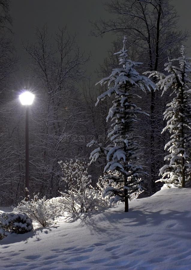 La lámpara del abeto y de calle imagen de archivo libre de regalías