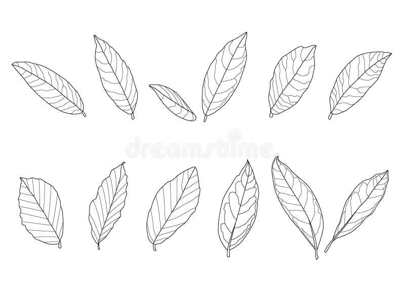 La línea negro de la sola hoja de las hojas y del modelo de la hoja trae para colorear para adornar en el fondo blanco imagen de archivo libre de regalías