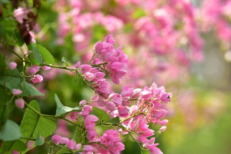 La L dentella il fiore del fiore sul suo albero nella primavera immagine stock libera da diritti