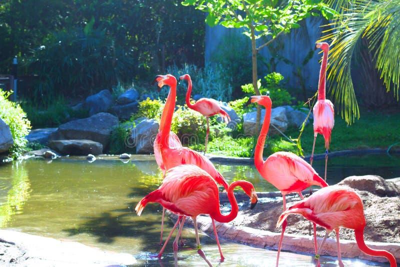 La laguna rosa fotografia stock