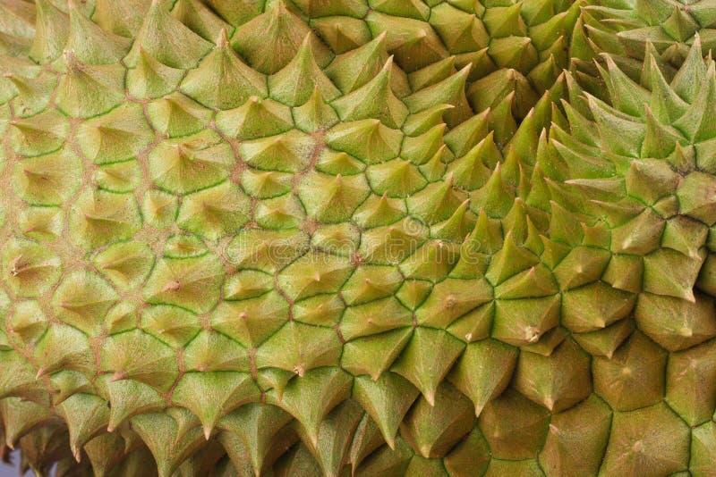 la lanière de lundi de durian est roi des fruits tropicaux sur la nourriture saine de fruit de durian de fond blanc photo stock