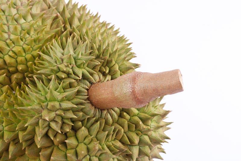 la lanière de lundi de durian est roi des fruits tropicaux sur la nourriture saine de fruit de durian de fond blanc d'isolement photographie stock