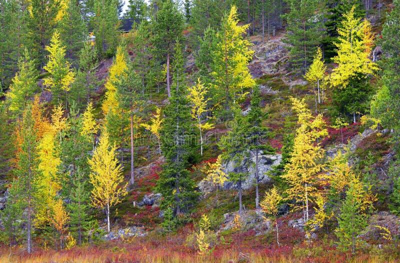 La Laponie en automne images stock