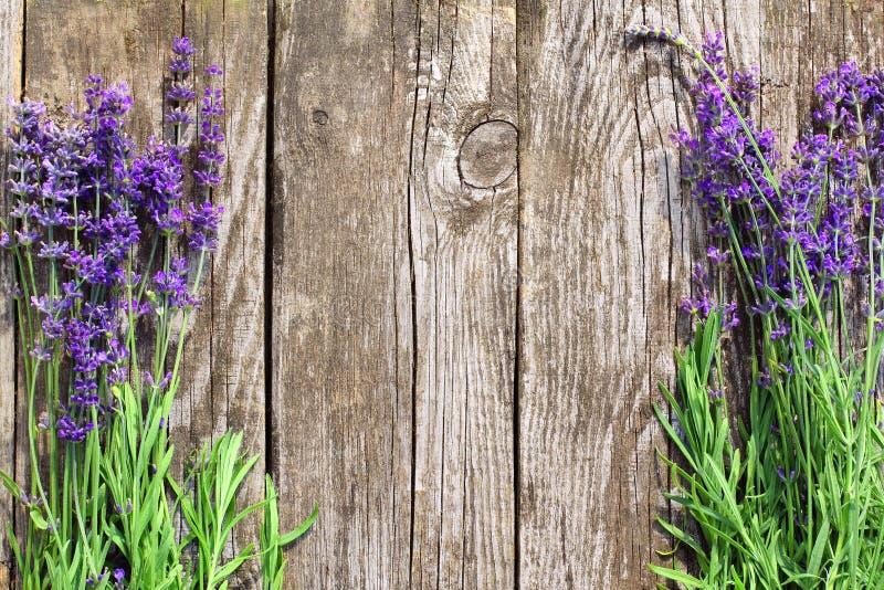 La lavanda di legno fiorisce il fondo fotografie stock