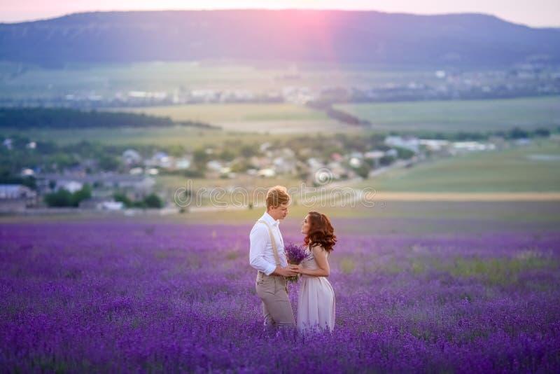 La lavande fleurit le champ de floraison et deux arbres vers le haut Valensole, Provence, France, l'Europe photo stock
