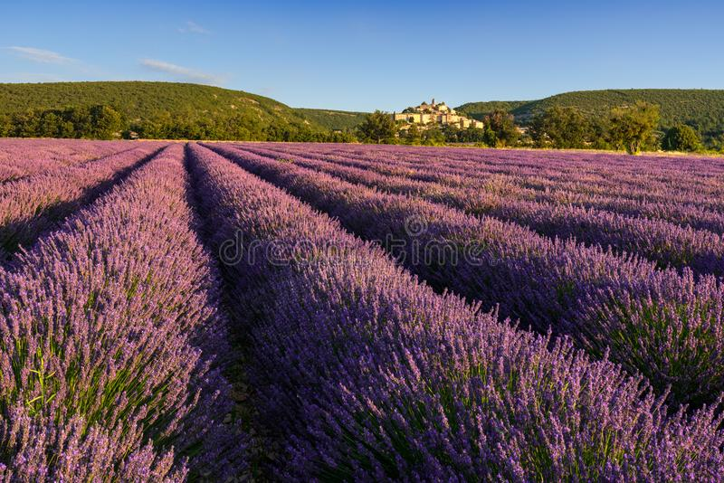 La lavande met en place au lever de soleil avec le village de Banon en été L'Alpes-De-Hautes-Provence, France photos stock