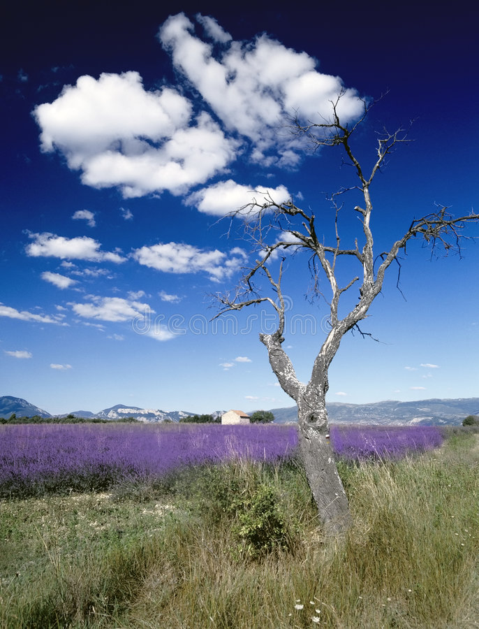 La lavande met en place la Provence France photo stock