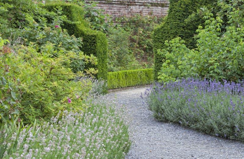 La lavande pourpre et blanche fleurit dans le jardin coloré images libres de droits