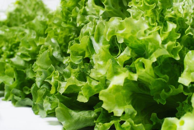 La lechuga fresca de la ensalada verde se va aislado en un primer blanco del fondo imágenes de archivo libres de regalías