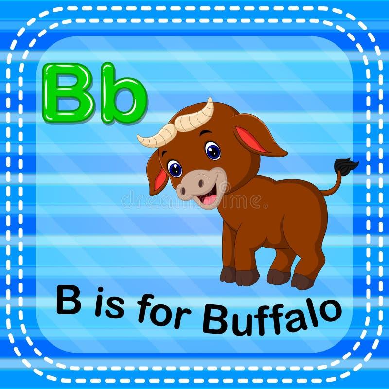 La lettera B di Flashcard è per il bufalo illustrazione di stock