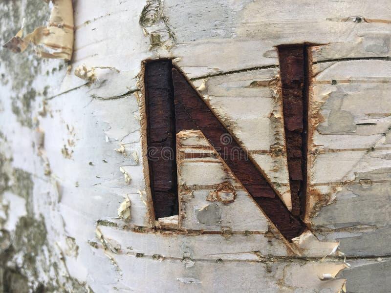 La lettera N ha scolpito nell'albero di betulla fotografie stock