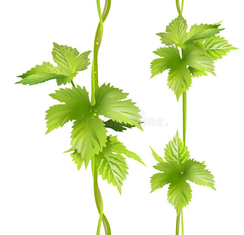 La liana verticale verde della vite lascia il luppolo illustrazione di stock