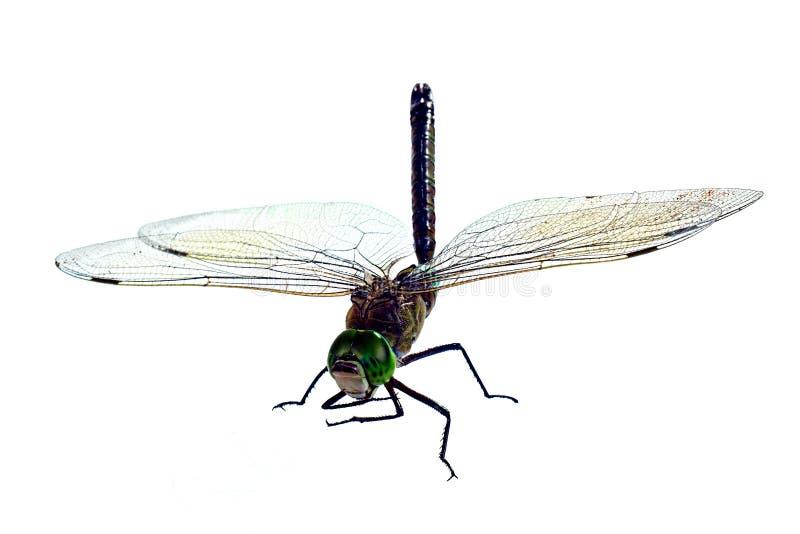 La libélula grande, aislada en un fondo blanco imagen de archivo