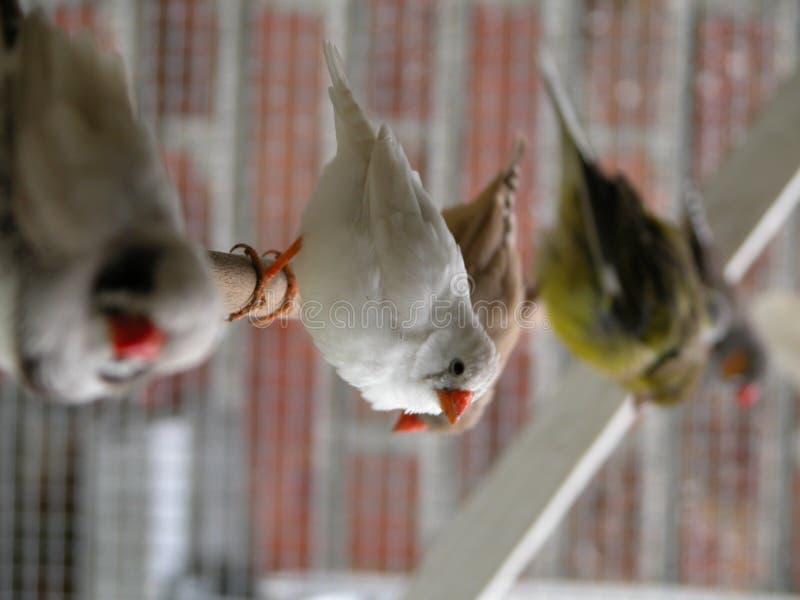 La ligne de l'oiseau photographie stock libre de droits