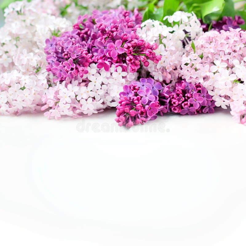 La lila florece el ramo fotos de archivo