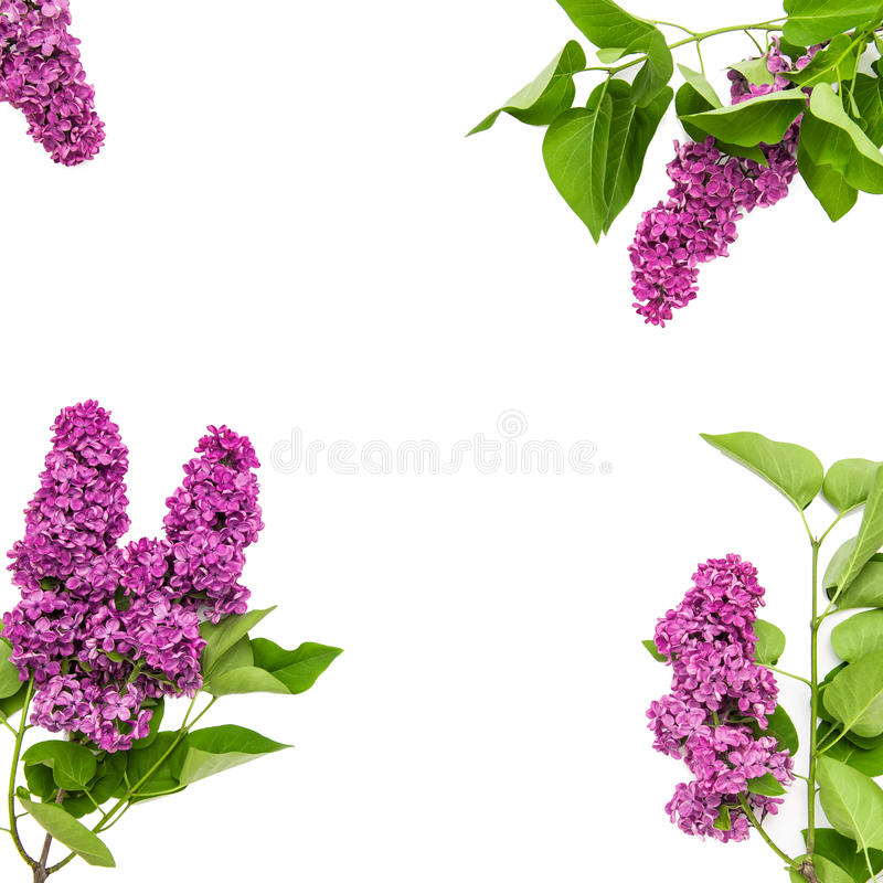 La lila florece el ramo Flores de la primavera imagen de archivo libre de regalías