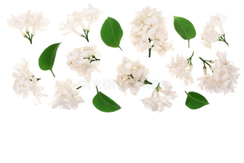 La lila ligera florece, ramifica y las hojas aisladas en el fondo blanco con el espacio de la copia para su texto Endecha plana V imagen de archivo libre de regalías