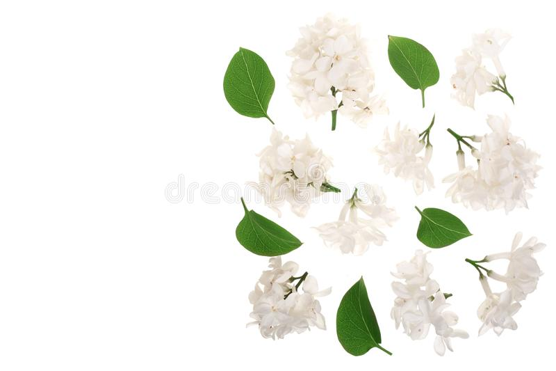 La lila ligera florece, ramifica y las hojas aisladas en el fondo blanco con el espacio de la copia para su texto Endecha plana V stock de ilustración
