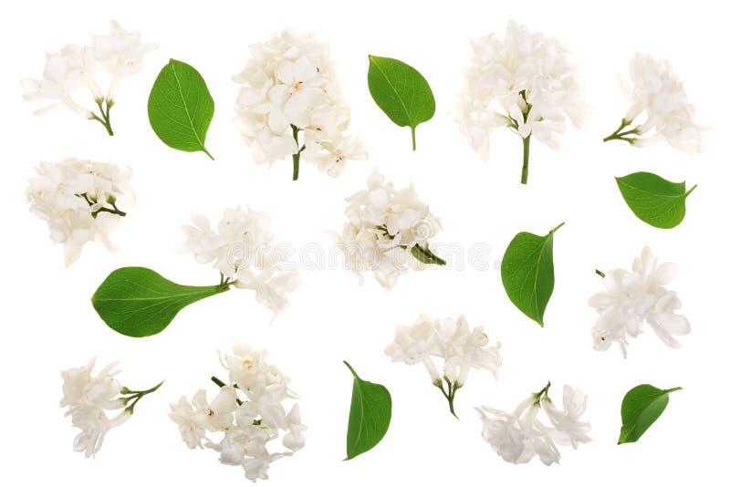 La lila ligera florece, ramifica y las hojas aisladas en el fondo blanco Endecha plana Visión superior imagen de archivo libre de regalías