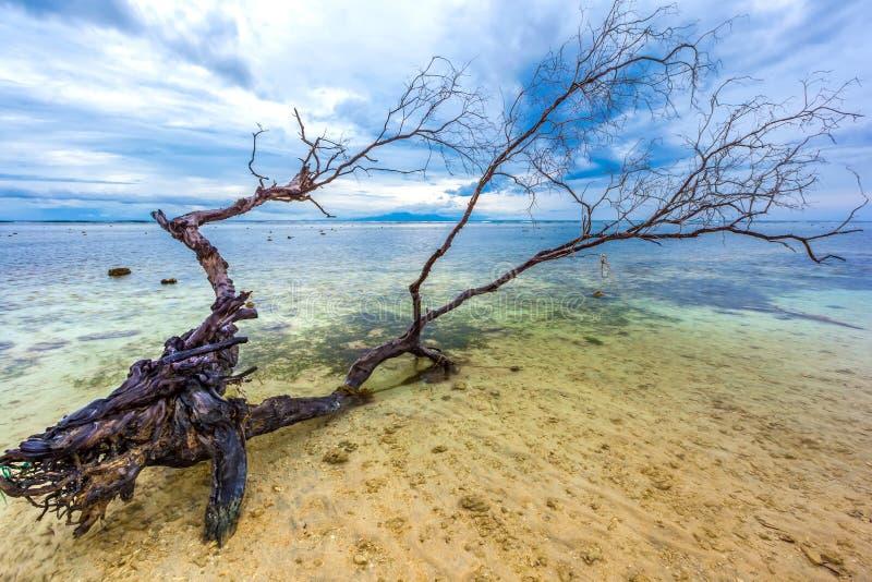 La linea costiera dell'isola di Gili Trawangan, Indonesia immagini stock libere da diritti