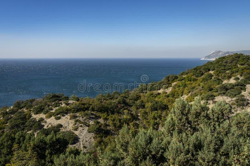 La linea costiera invasa con i verdi luminosi di vecchi ginepri Il mare blu entra in cielo senza nuvole blu fotografie stock