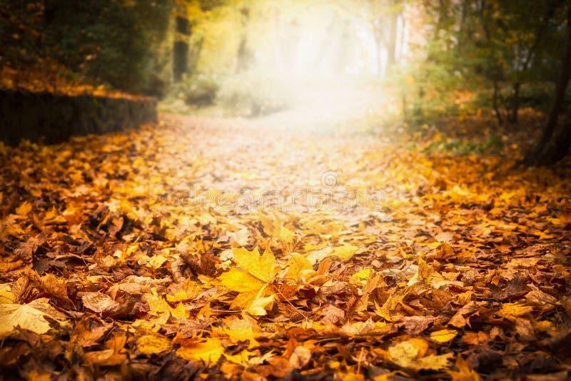 La litera de la hoja del otoño en jardín o parque, cae fondo al aire libre de la naturaleza con las hojas caidas coloridas fotos de archivo