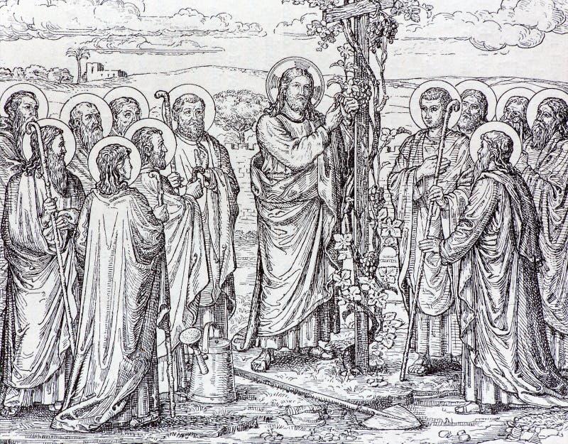 La litografia di Gesù come il gambo dell'uva fotografia stock libera da diritti