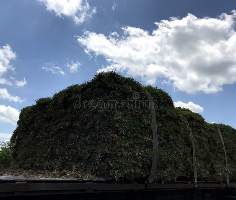 La livraison de gazon d'herbe sur le camion Image de photo photo stock
