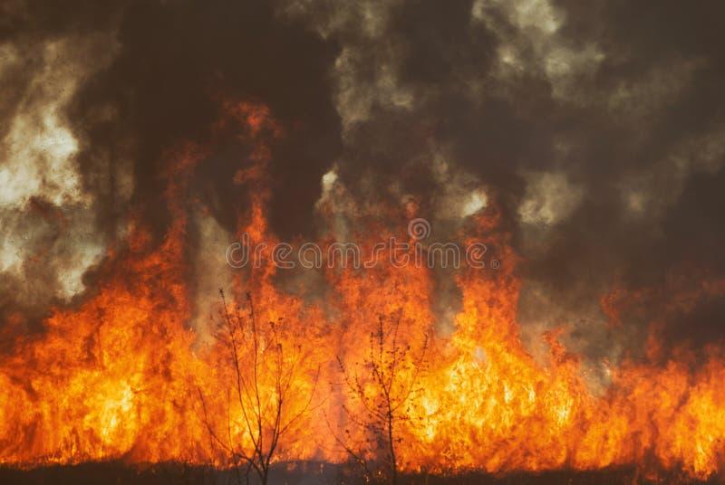La llama que rabia de la quemadura del fuego en los campos, los bosques y el humo acre grueso negro Primer grande del incendio fu fotografía de archivo libre de regalías