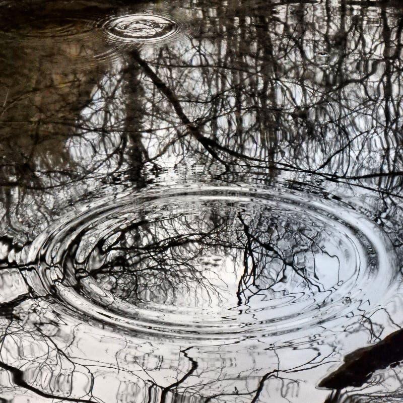 La lluvia cae círculos perfectos foto de archivo libre de regalías