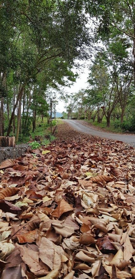 La longue route dans une forêt avec la chute brune part comme premier plan image libre de droits