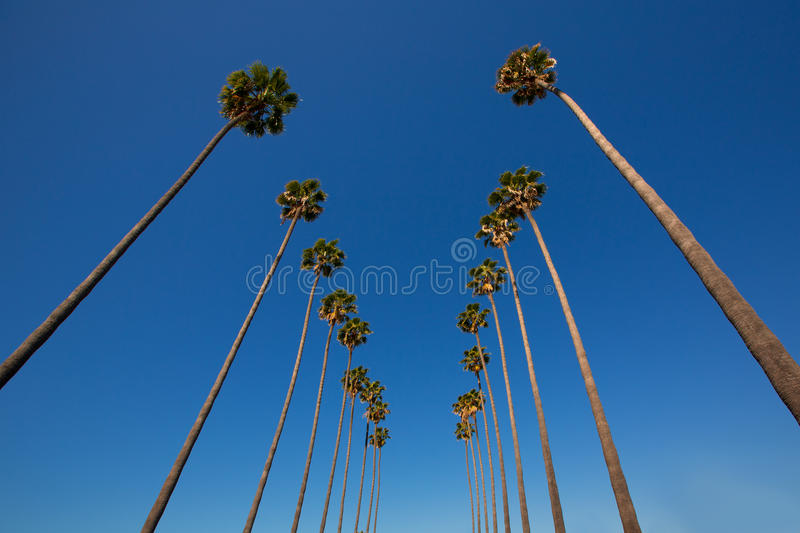Download LA Los Angeles Palm Trees In A Row Typical California Stock Image - Image: 33851957