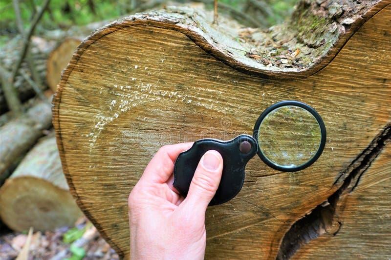 La loupe agrandit des anneaux d'arbre photographie stock libre de droits