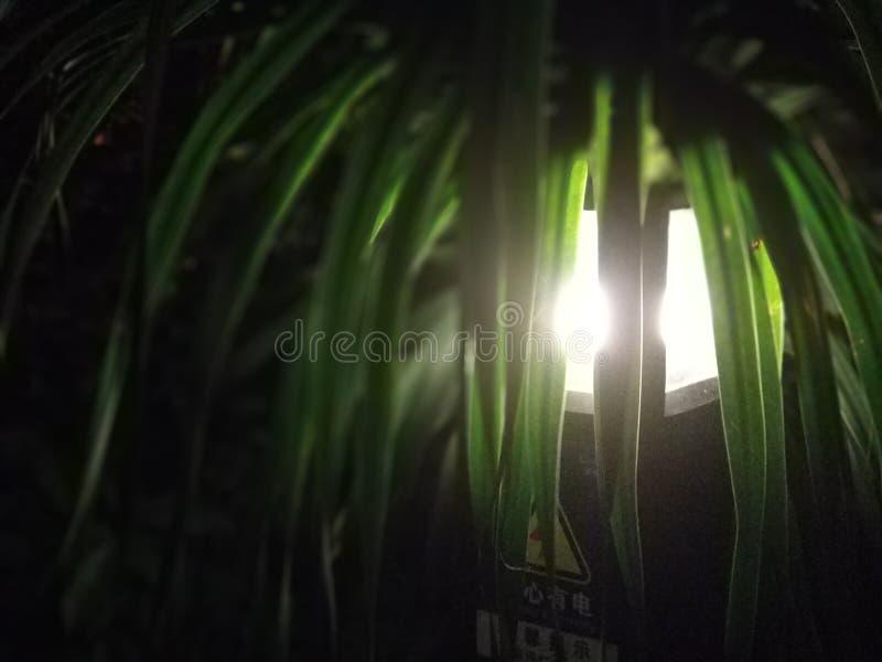 La luce dalle foglie verdi fotografia stock