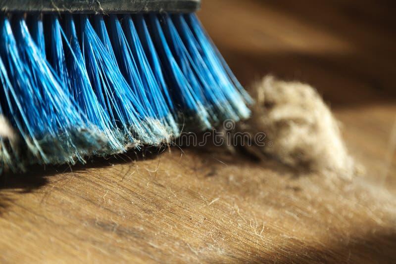 Palla della scopa, della polvere & della pelliccia sul pavimento di parquet fotografie stock libere da diritti
