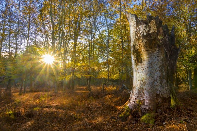 La luce solare scorre attraverso gli alberi e lascia nella nuova foresta fotografia stock