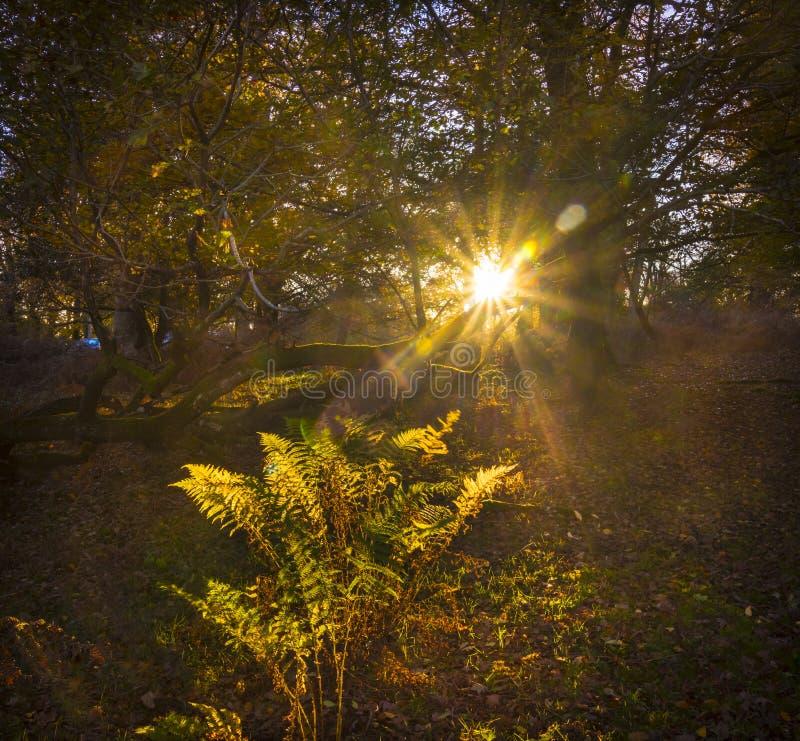 La luce solare scorre attraverso gli alberi e lascia nella nuova foresta immagini stock libere da diritti