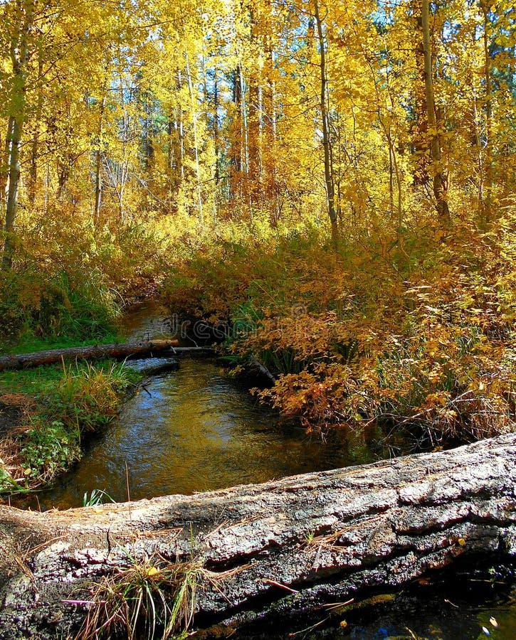 La lueur de la forêt d'or photographie stock libre de droits