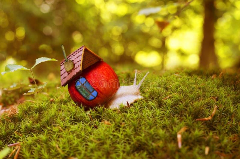 La lumaca striscia fra il muschio della foresta con una casa immagine stock libera da diritti