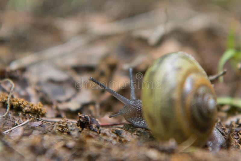 La lumaca striscia via fotografia stock