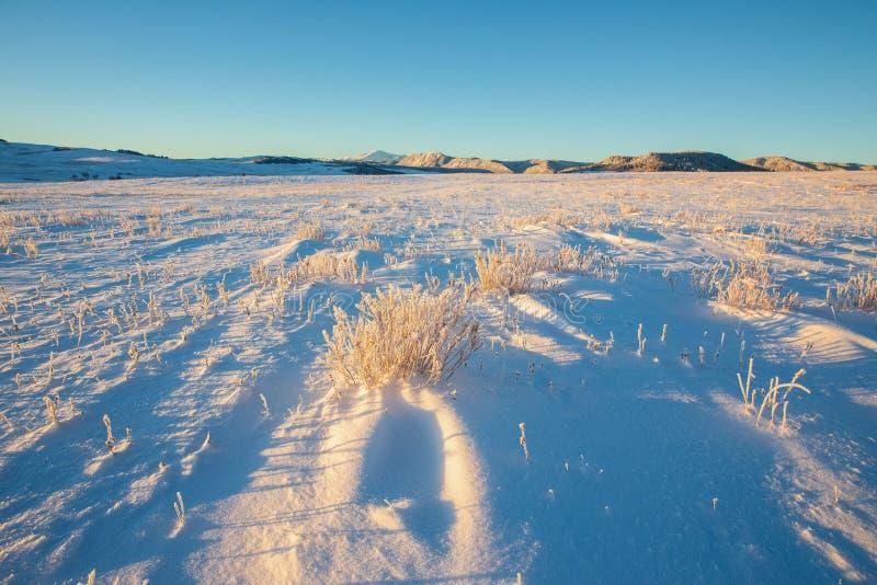 La lumière de début de la matinée sur la neige couverte et le vent a balayé la prairie image libre de droits