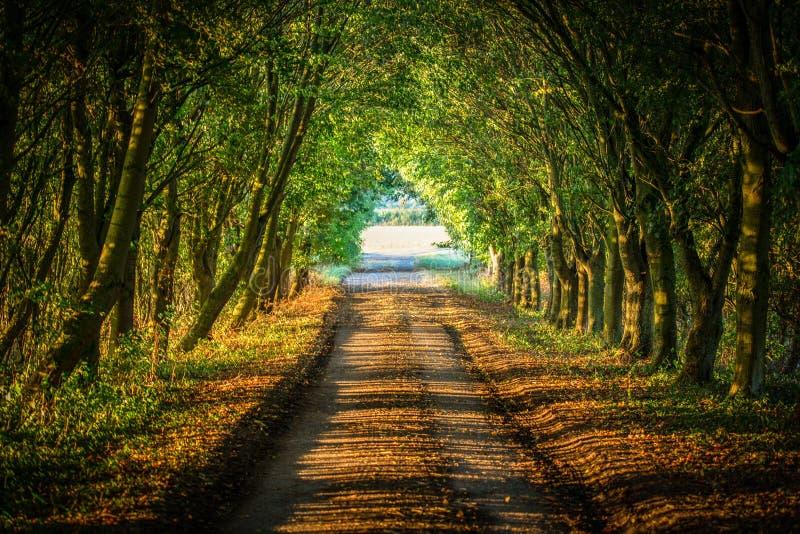 La lumière de soirée tombe à travers la belle voie de terres cultivables dans le Briti photos libres de droits