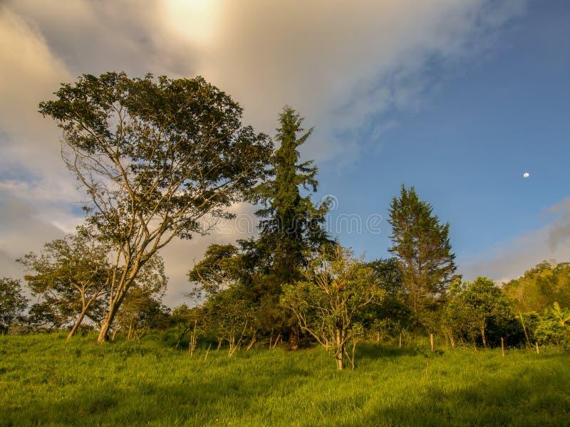 La lumière du coucher du soleil au-dessus de la forêt photos libres de droits